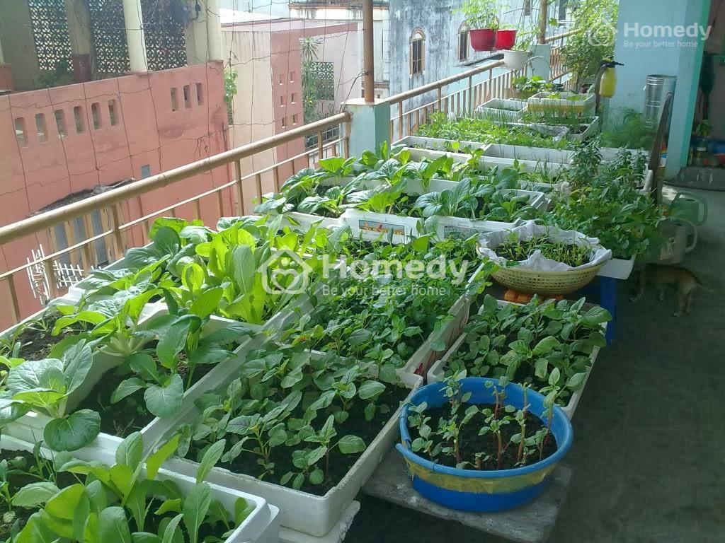 Vườn rau sạch xanh mướt trên ban công là ước mơ của không ít gia đình