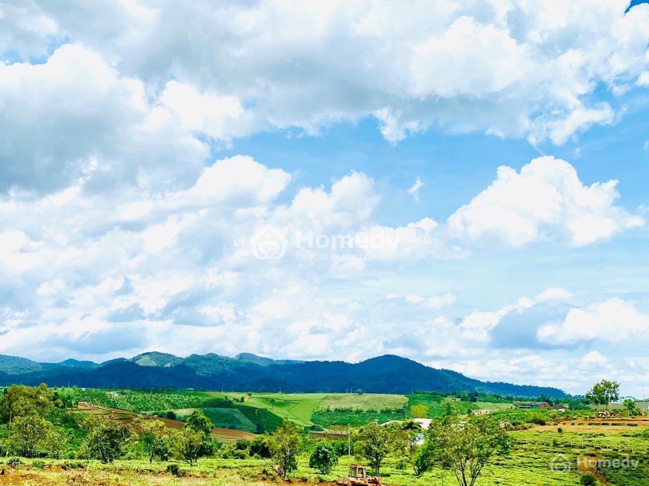 Forest Hill Bảo Lộc