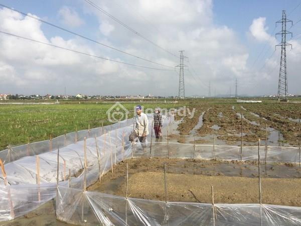 Thị trường mua bán đất nông lâm nghiệp Hà Nội